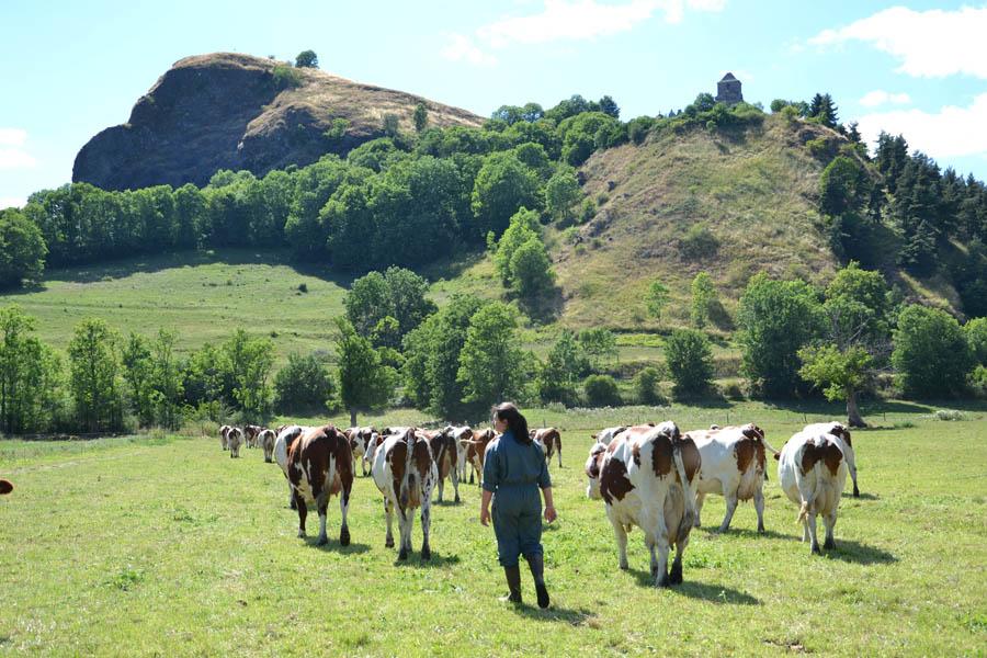 De la vache à la fromagère